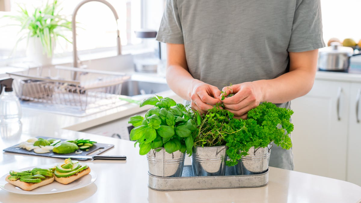 A man prunes a set of herbs planted in steel pots in a kitchen.