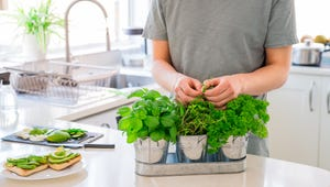 Growing These Herbs Can Ward Off Bugs