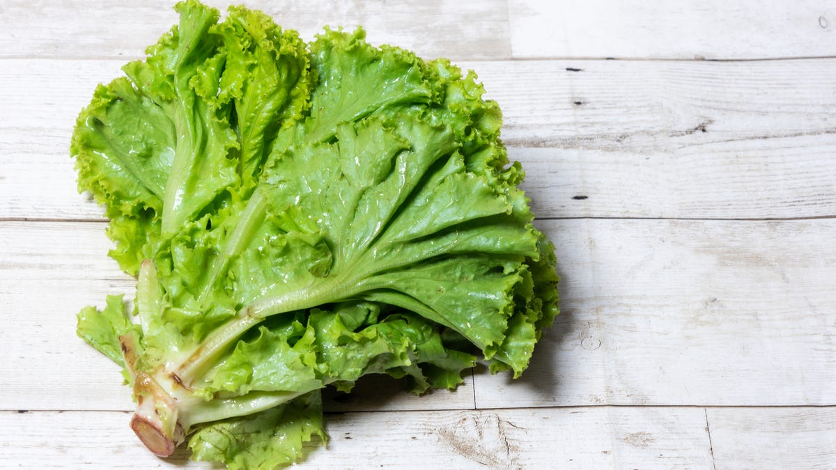 A head of lettuce has rusted edges.