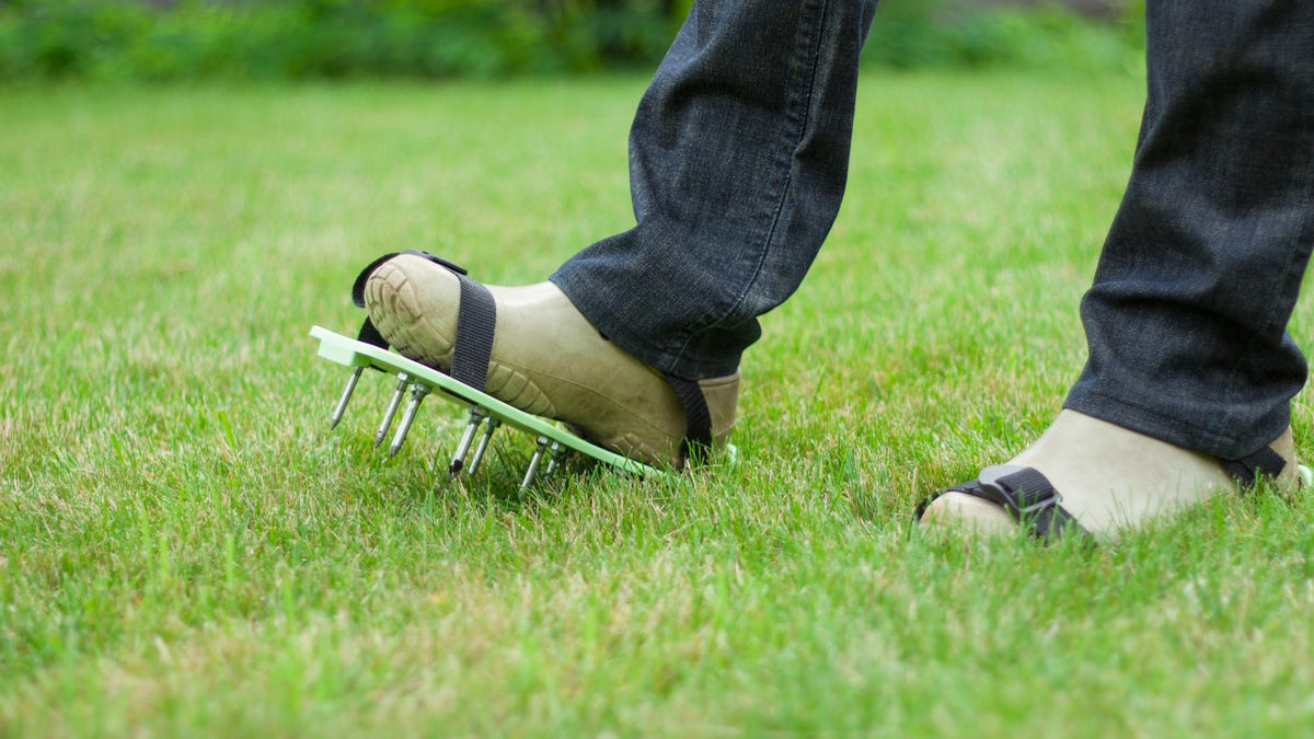 Someone wearing spiked soles strapped to the bottom of their shoes and walking on grass.