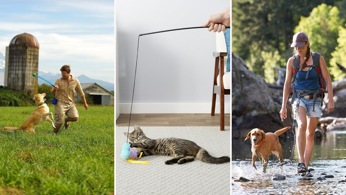 A man throws a ball for a dog. A cat plays with a dangling mouse toy. A woman hikes with a dog.
