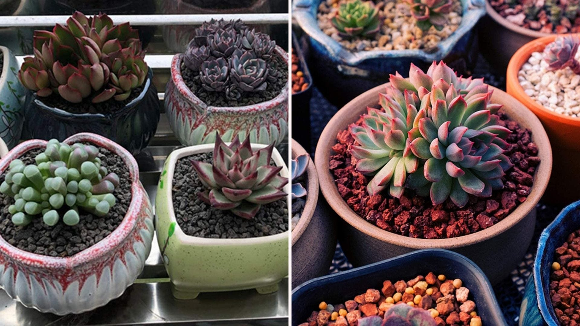 Small succulents in planters with lava rocks