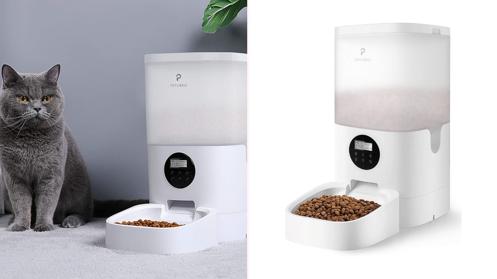 A ca sits next to an automatic feeder.