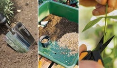 5 Simple Tips to Make Repotting Your Plants a Breeze