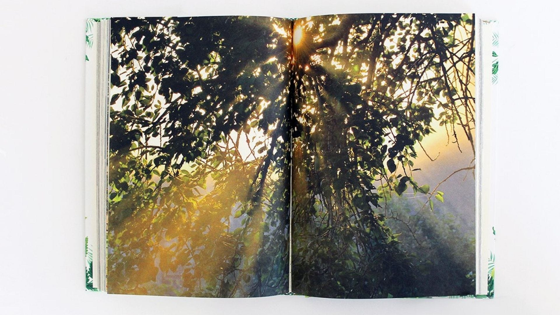 A photograph in a book of light coming through the trees