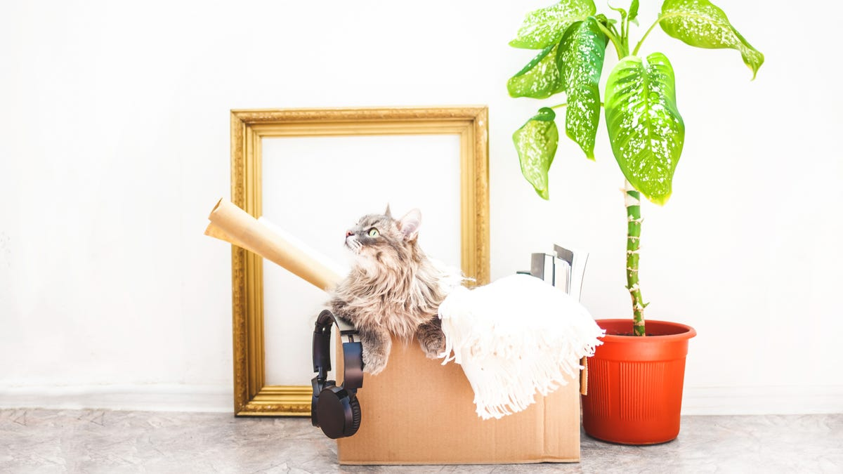 A cat sits in a moving box surrounded by a plant and a mirror.