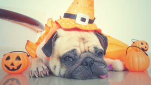 This Quiz Will Tell You What Your Pet Should Be for Halloween