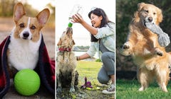 12 Useful Gifts for Dog Owners