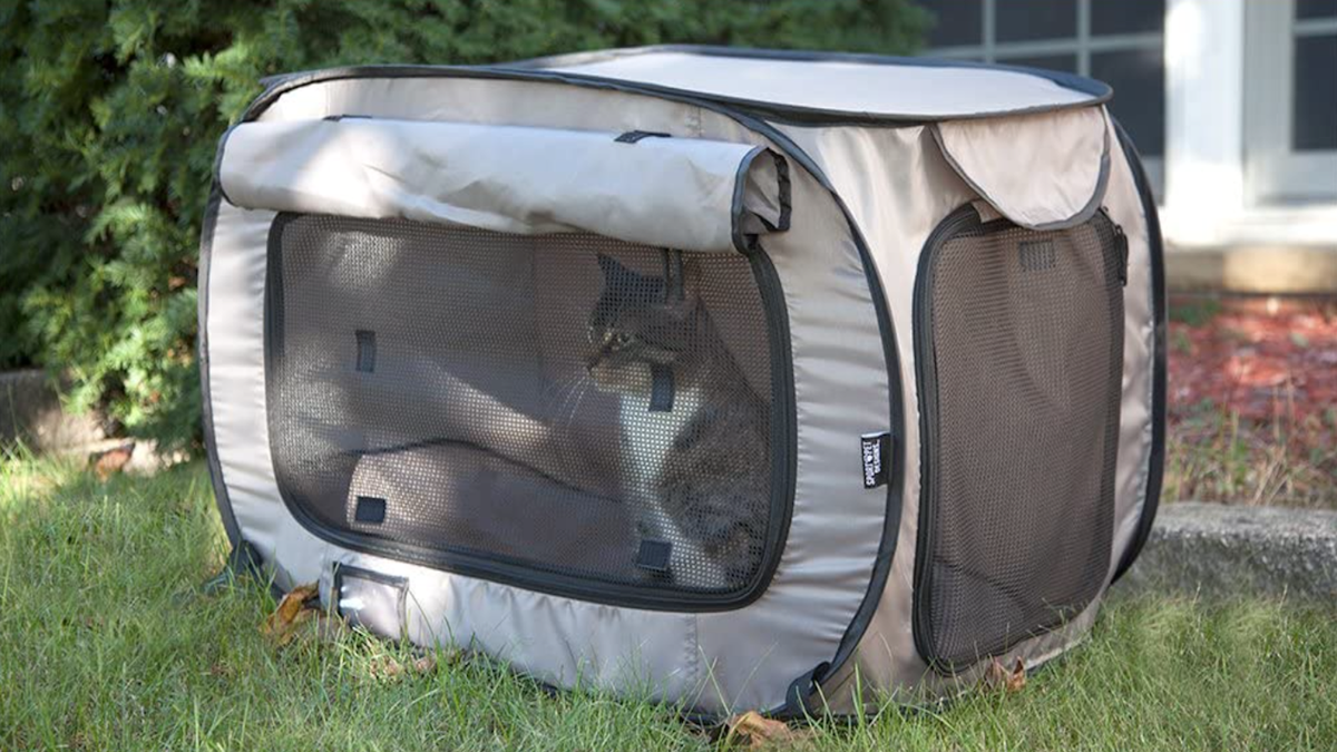 cat in a soft, tan-colored, mesh-screened cat kennel out in the front yard