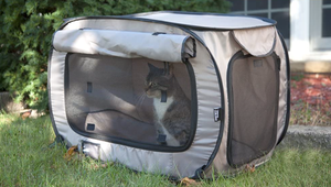 The Best Cat Kennels for Your Feline