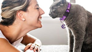 The Best Cat Collars for Your Feline Companion