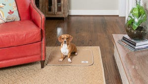 The Best Dog Pee Pads for Your Home