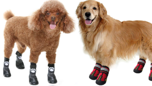 The Best Paw Protectors for Every Kind of Dog