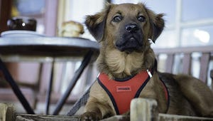 The Best Harnesses for Your Small Dog