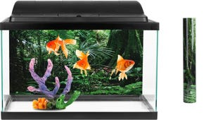 The Best Backgrounds for Your Aquarium