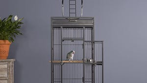 The Best Birdcages for Your Pet