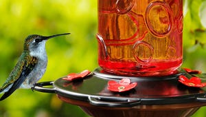 The Best Bird Feeders for Your Yard