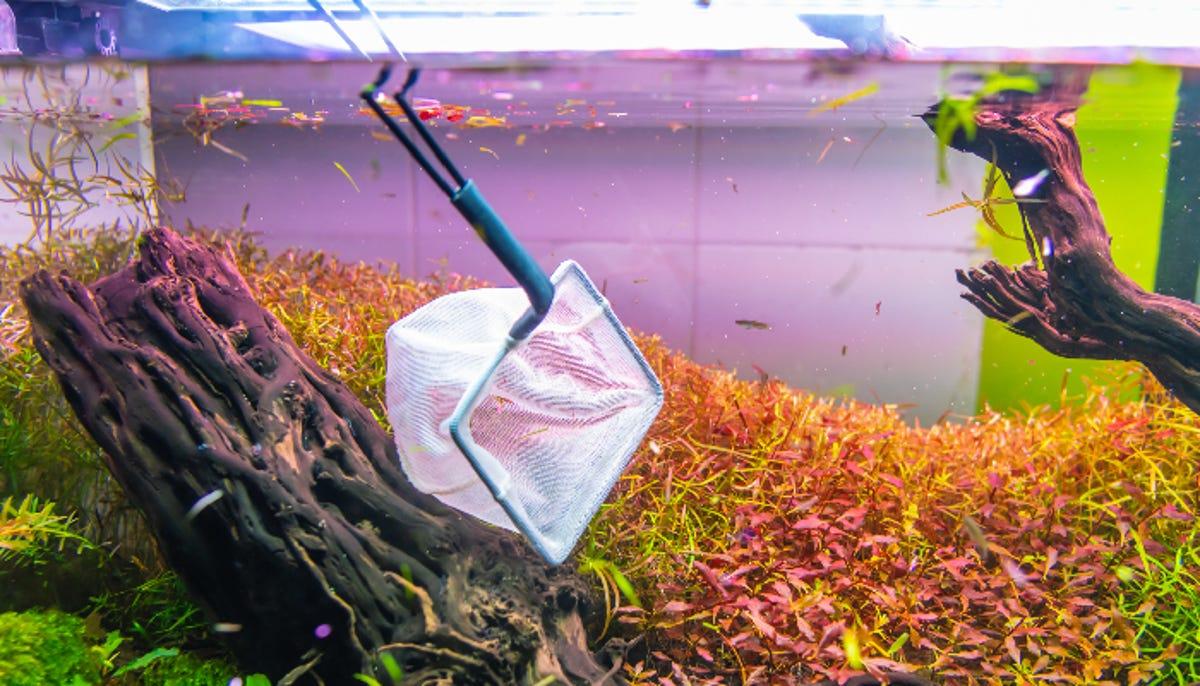 nature style aquarium tank with fishing net