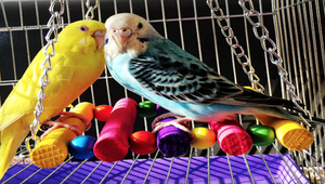 The Top Toys for Your Pet Bird