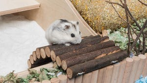 The Best Toys for Hamsters