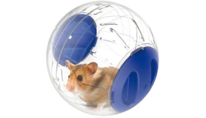 hamster inside of a clear plastic ball with two blue side panel doors