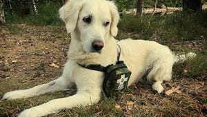 The Best Dog First Aid Kits for Your Pup