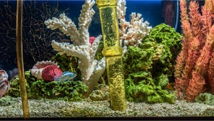 The Best Gravel Cleaners for Your Fish Tank