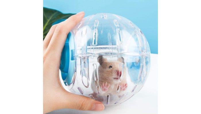 hamster inside a clear and blue plastic exercise ball that's held still by a hand