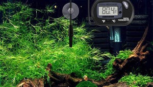 The Best Aquarium Thermometers for Happy Fish