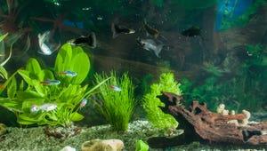 The Best Aquarium Ornaments for Your Fish Tank