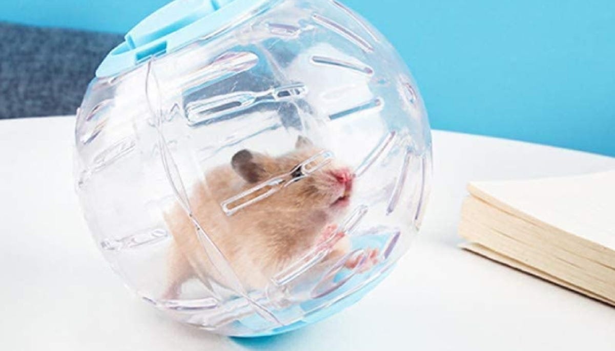 hamster rolling in a clear plastic exercise ball on a table by a book
