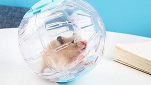 The Best Exercise Balls for Hamsters