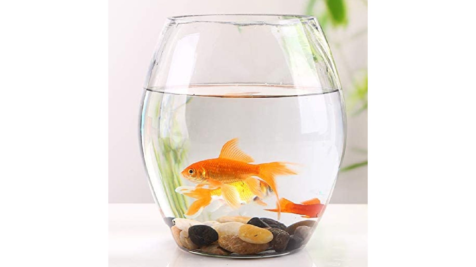 small aquarium filled with goldfish and brown gravel on the bottom of the tank