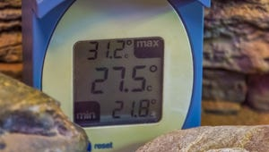 The Best Thermometers for Your Terrarium