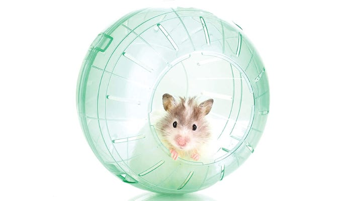 a hamster poking out of the door of a clear plastic hamster ball