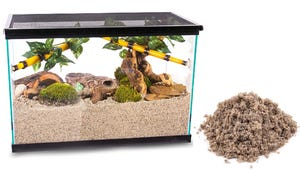 The Best Sand Substrates for Aquariums