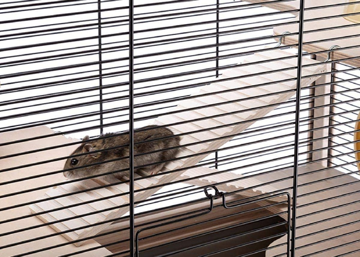 small brown hamster walking down a ramp inside its cage