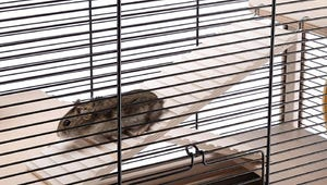 The Best Habitats for Hamsters