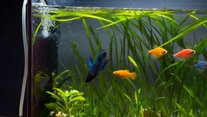 Aquarium Air Pumps for Better Bubbles