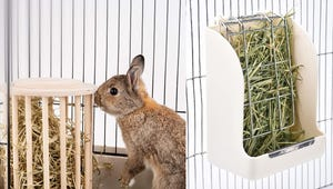 The Best Hay Feeders for Your Rabbit