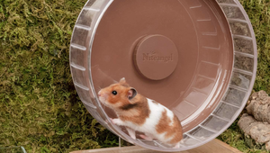The Best Hamster Wheels for Your Pet