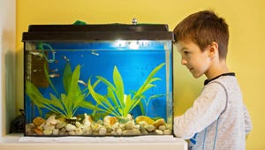 The Best Submersible Water Pumps for Your Aquarium
