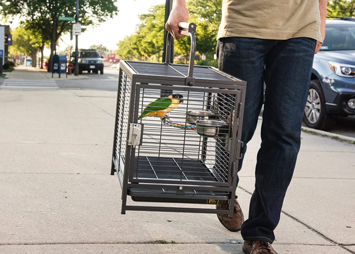 Person walking down the street carrying bird in bird carrier
