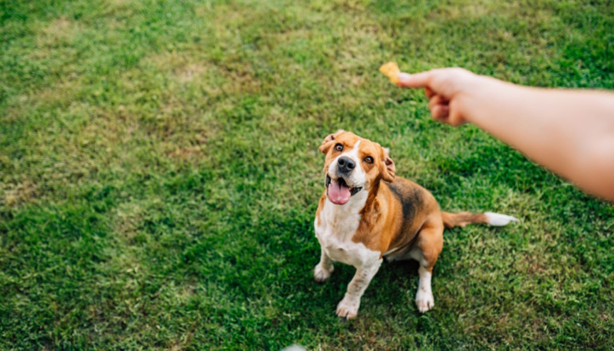 a hand holding a dog treat about to give it to a happy waiting dog