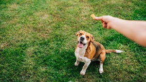 Diabetic Dog Treats for Your Four-Legged Friend