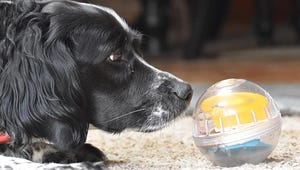 The Best Dog Treat Dispensers for Your Pet