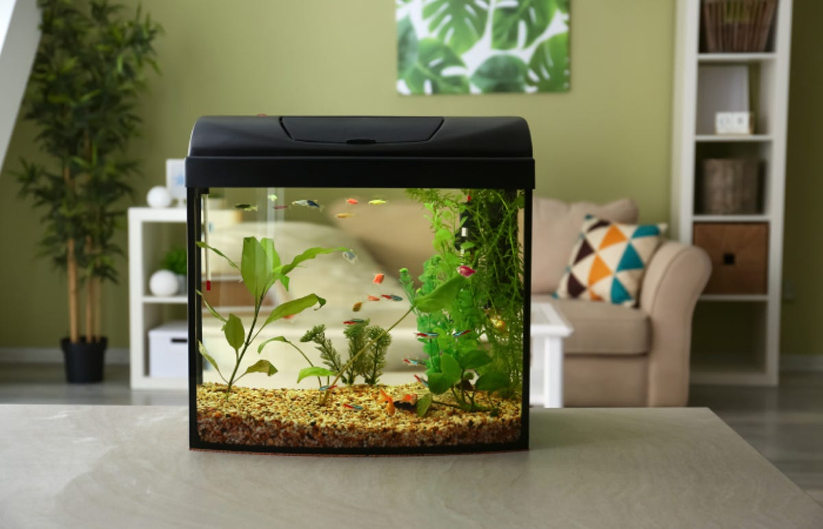 aquarium with a hood on it resting on a table