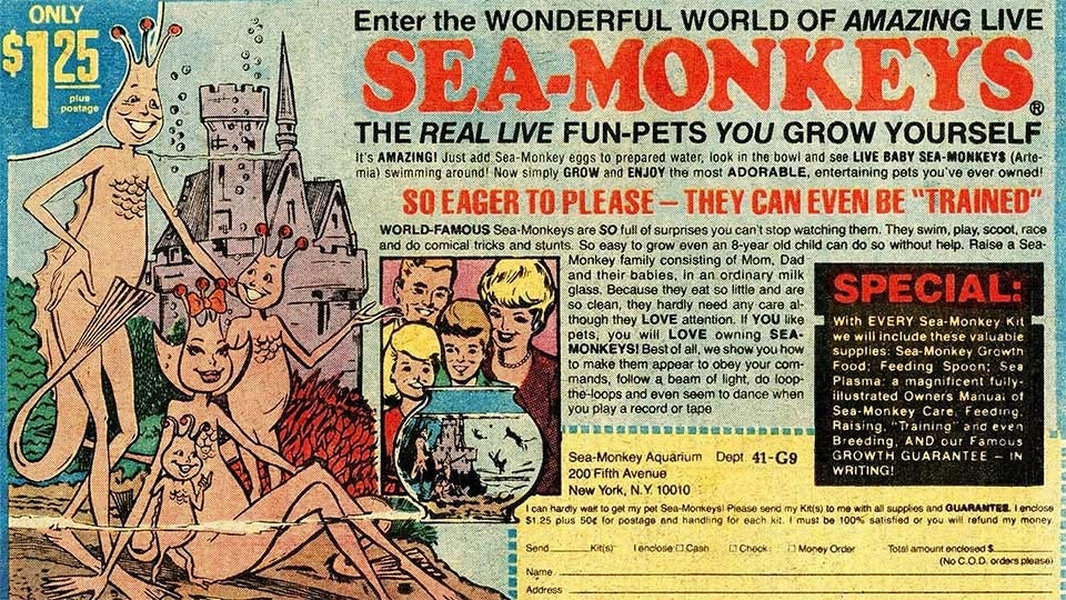 A 1978 advertisement for sea monkeys.