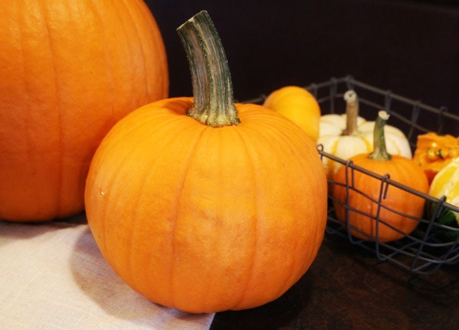 A pie pumpkin in the center, with a basket of gourds, and a large carving pumpkin in the background.