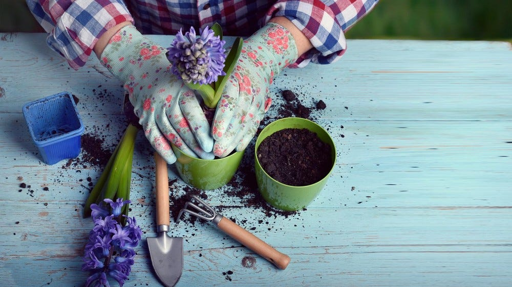 Someone potting plants on a table with fresh soil.